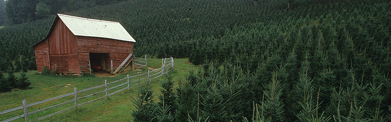 IPM Christmas Tree Farms | NC State Extension