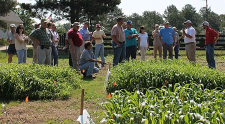 Farmers look at test plots