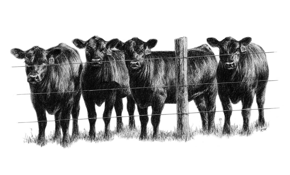 four Heifers