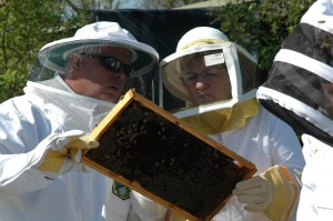 Inspecting Brood Frame