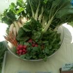 bok choy vegetables