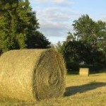 hay bail in a field