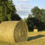 hay bail in a field