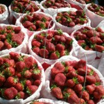 plastic buckets of strawberries for sale