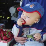 Little boy eating strawberry