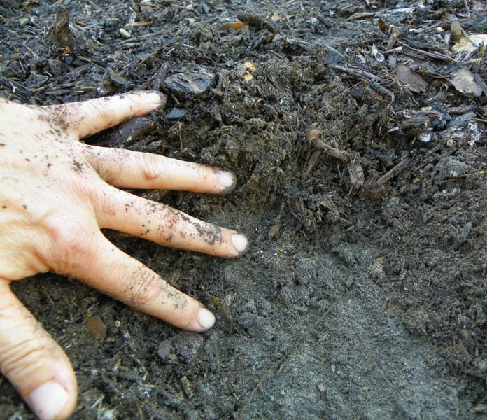 Can too much mulch kill plants north carolina for Where can you find soil
