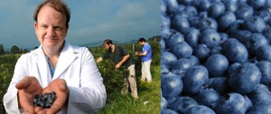 Sequencing the Blueberry Genome at NCRC
