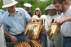 Beekeepers opening up a hive for students