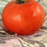 Ripe tomato sitting on dollar bills