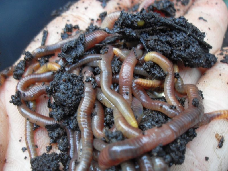 How to Compost Indoors With Worms | North Carolina Cooperative Extension