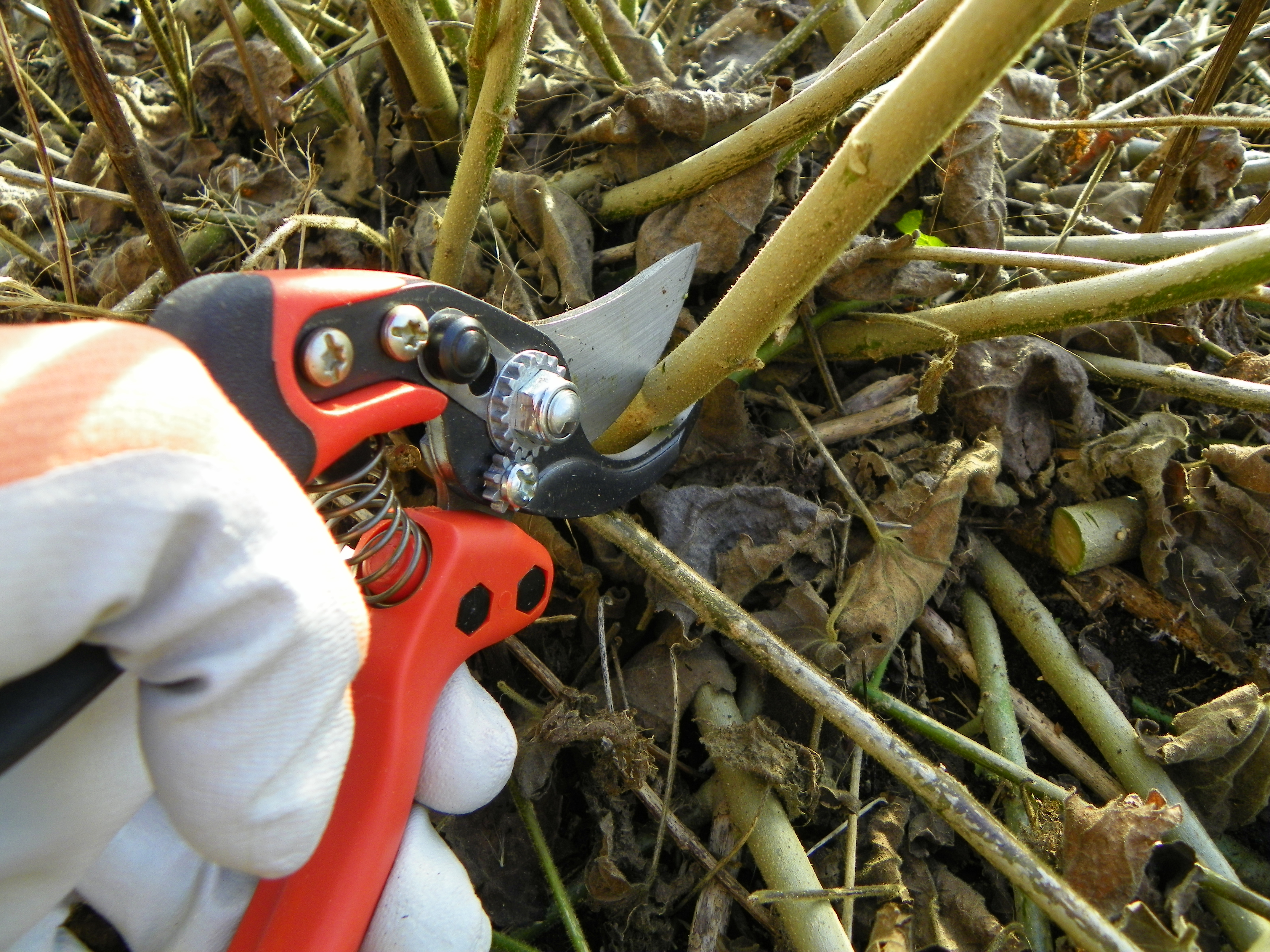 Image result for cutting back perennials