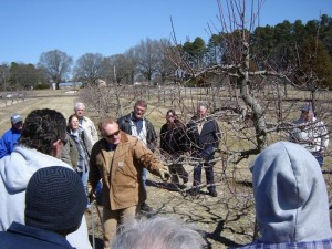 Apple tree pruning demonstration