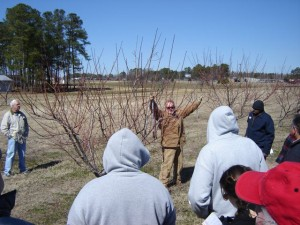 Mike Parker Pruning a peach tree
