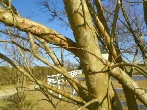 Crossing branch