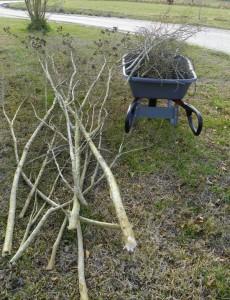 Crape myrtle branches