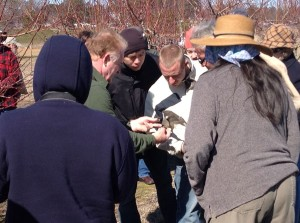 Examining amber for signs of peach tree borer