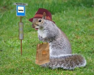 Gray squirrel with handbag at a bus stop.