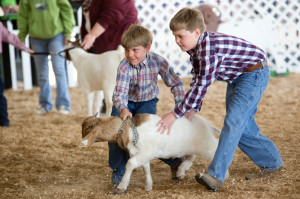 Zachary Keeter Helping a cloverbud move his goat in the cloverbud Goat show. (Cloverbuds are 5-8 year old 4-Hers)