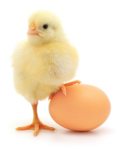 baby-chick-and-an-egg