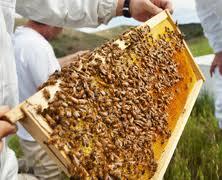 beekeepinghive
