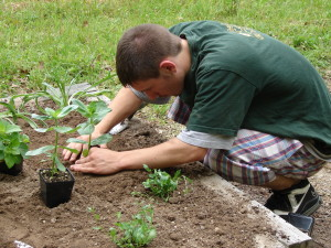 Young Man Planting at Bullington Gardens