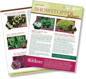 Showstopper-FlyerFrontBack