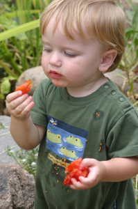Child eating a tomato