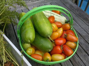 Cucumbers and Tomatoes from the garden, photo by Lucy Bradley