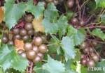 Welder clusters