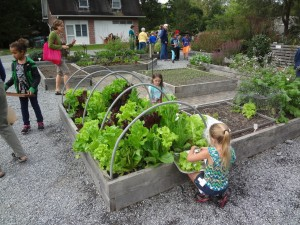 School gardens provide an integrated context for learning about food, nutrition, science, math and more!