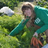 Apprentice farmer harvesting carrots