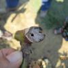 Hole on pruned blackberry cane. Photo via Gina Fernandez, NCSU Department of Horticulture