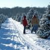 christmas-trees1