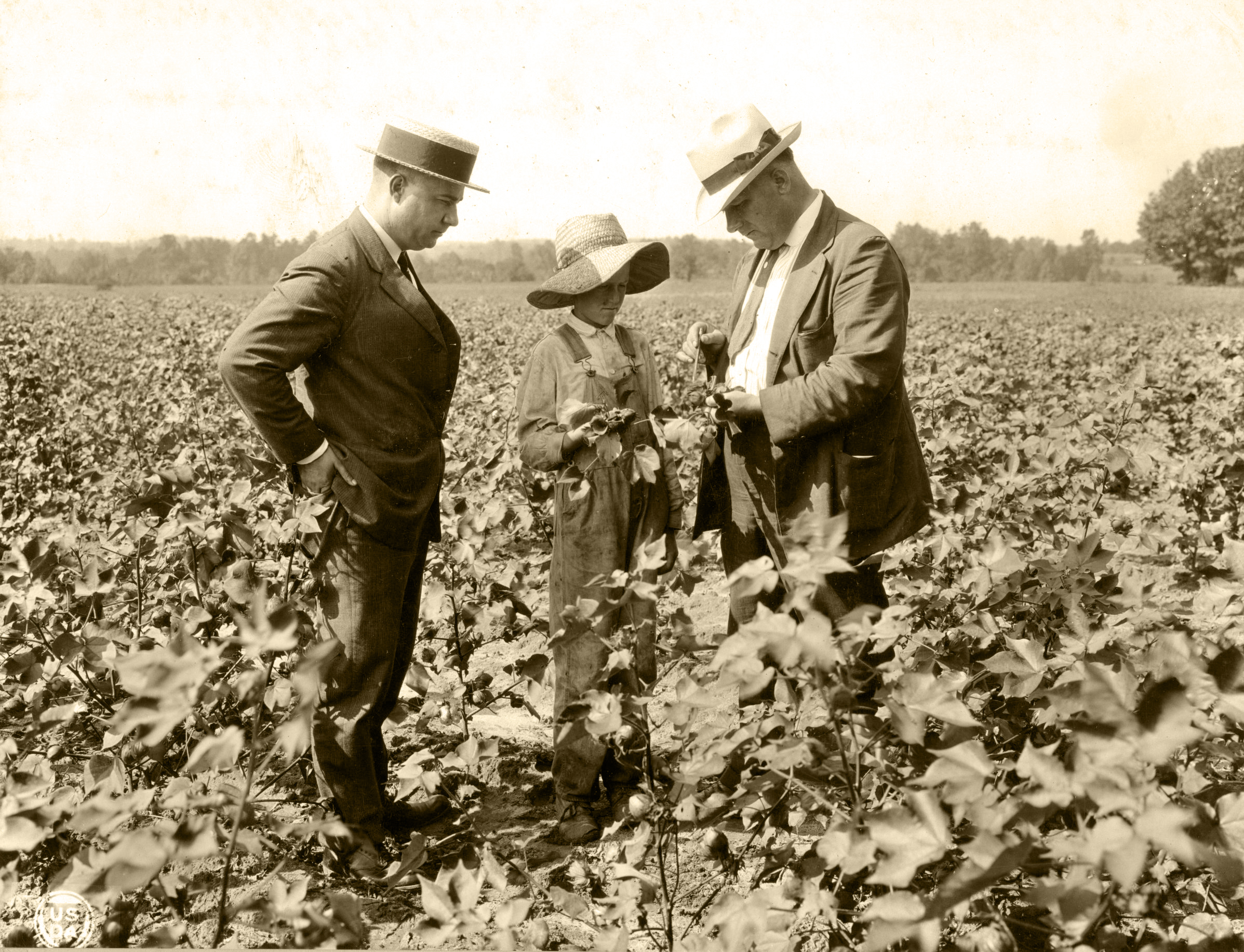 County agent R.W. Graham watches as Frank H. Jeter, right, explains to an Extension club member how to control boll-rot on cotton.