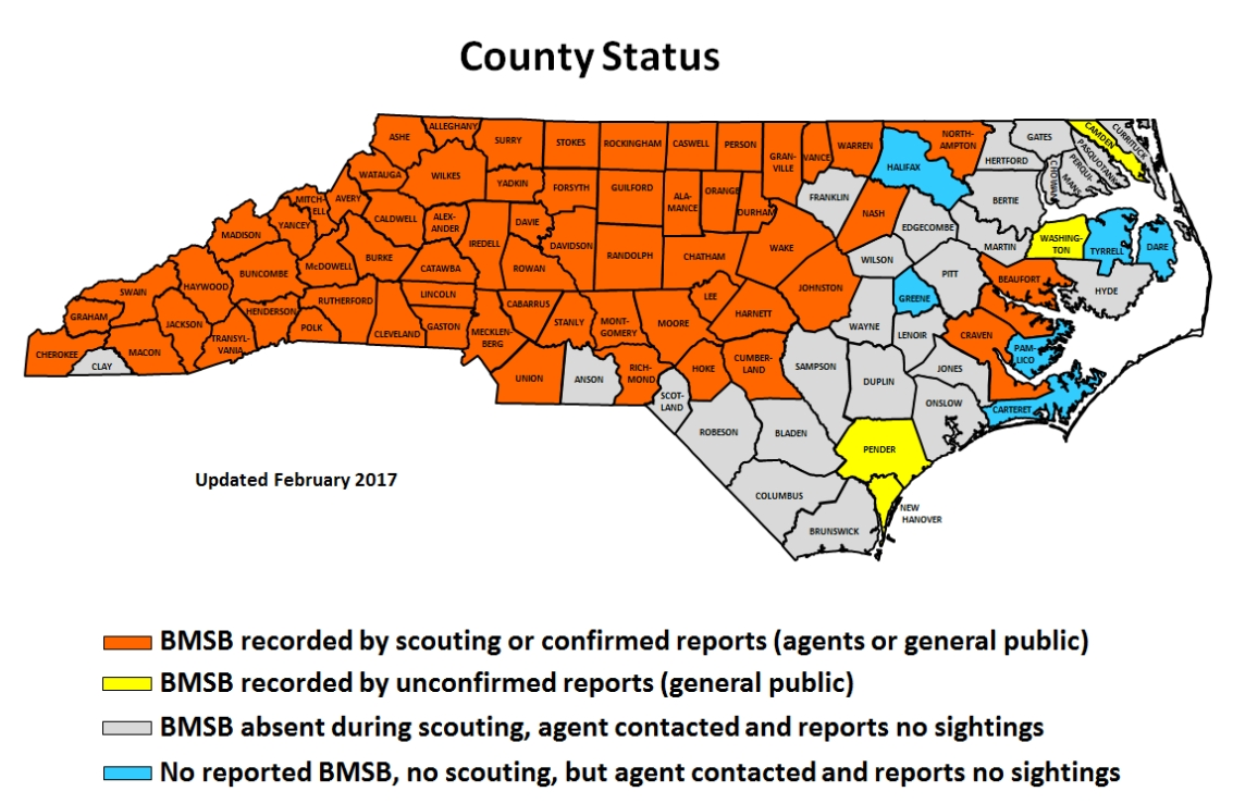 Brown Marmorated Stink Bug In North Carolina NC State Extension - Map in north carolina