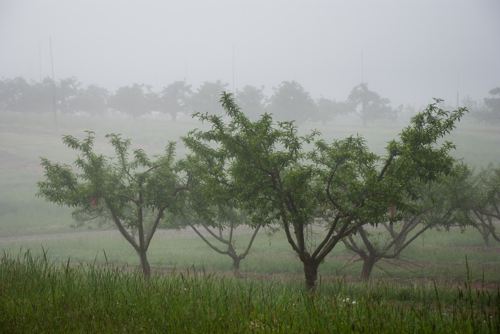 MHCRS fog 04