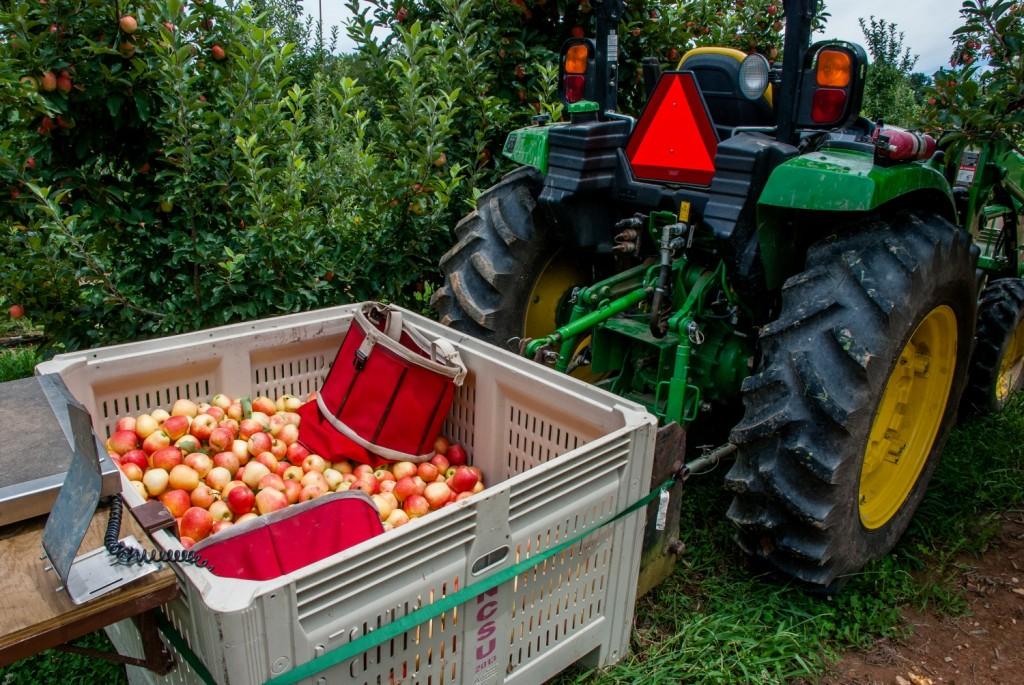 MHCRS harvest 2016 026