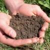 Soil-image-300x206