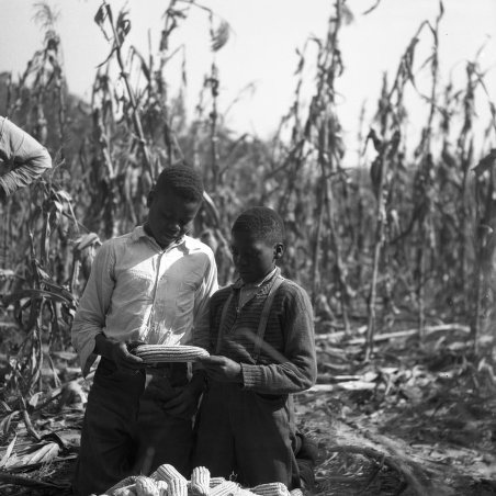 Early 4-H Corn Club members Absenia Johnson and Aron Johnson, of the Dawson 4-H Club in Scotland Neck examine their corn. The two brothers produced 80 bushels of corn an an acre of ground, The photo was taken Nov. 8, 1939.