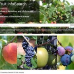 Fruit InfoSearch