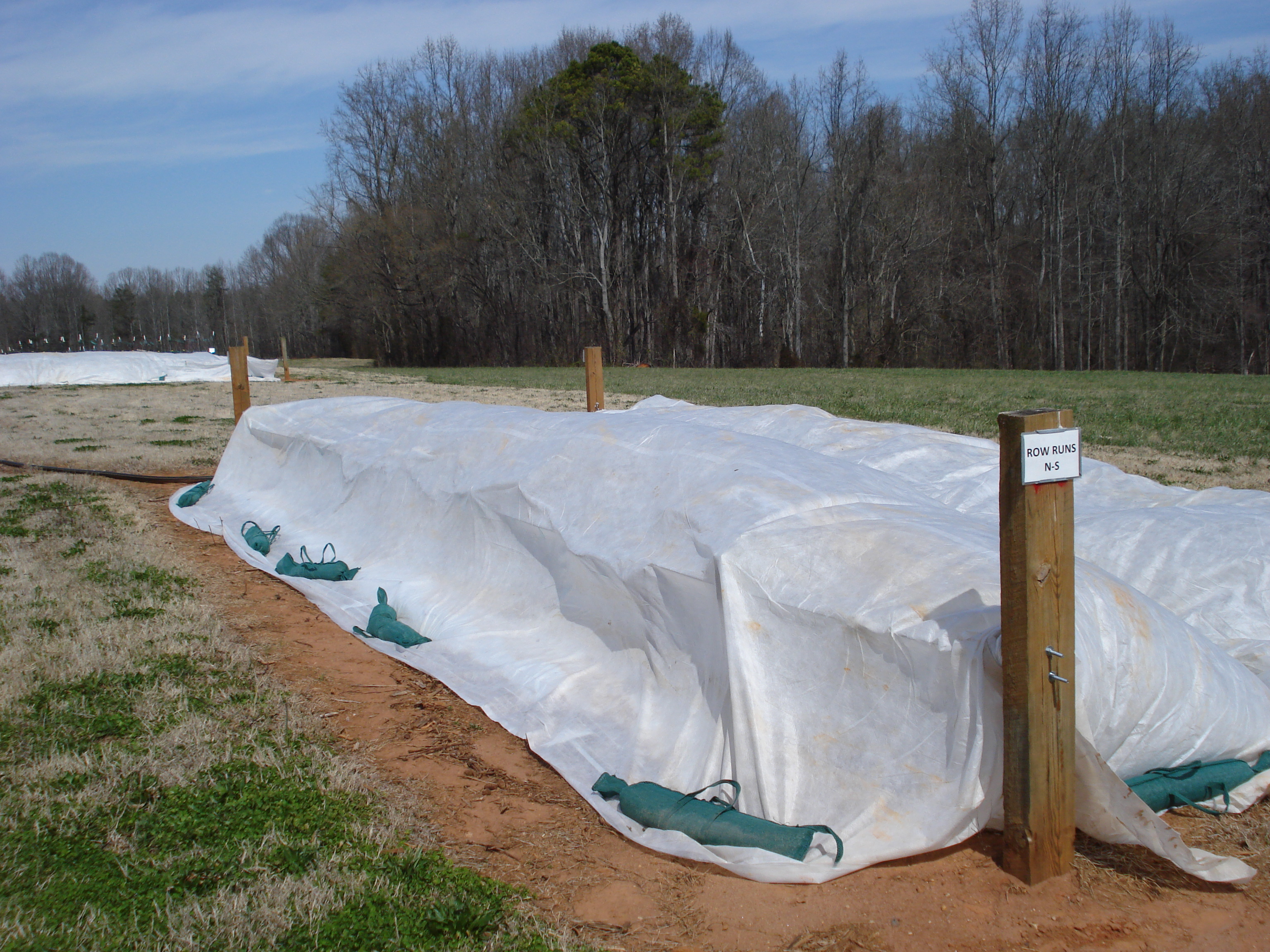 swing trellis with row covers 3-22-13 002