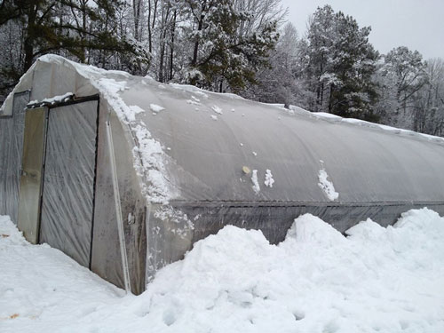 Snow-free high tunnel at Granite Springs Farm in Pittsboro. Photo by Laura Reedy Stewart.