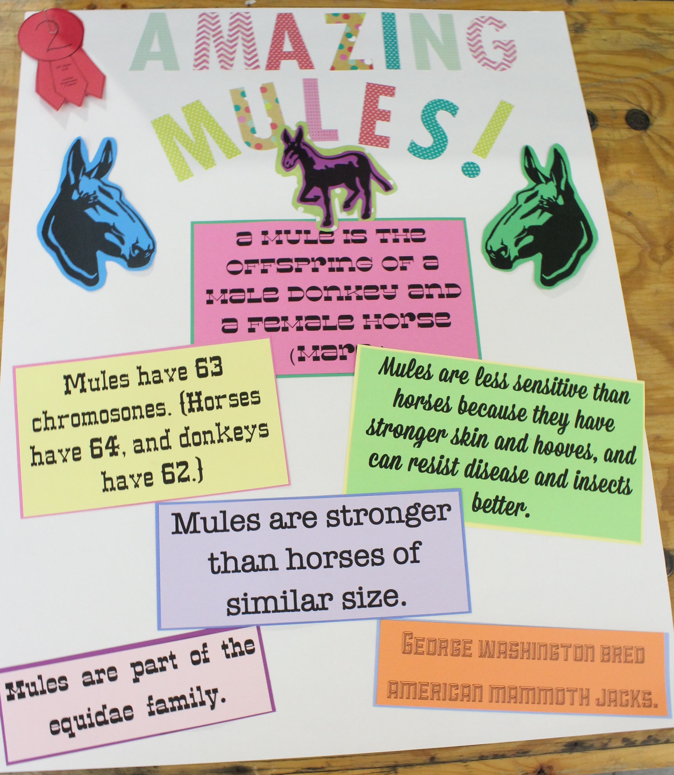 Horse Poster Contest NC State Extension