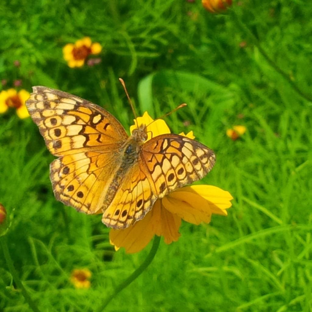 CARLEY_butterfly