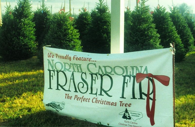 Outdoor sign advertising NC Fraser Fir trees - Where To Buy Your Real Christmas Tree NC State Extension