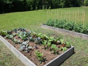 Mount Vernon Community Garden