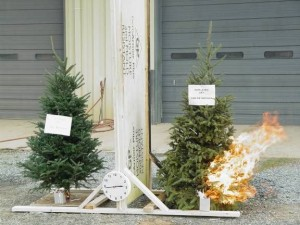 Comparison of the flammability of moist and dry Christmas trees