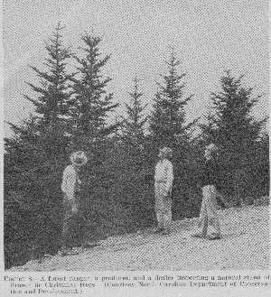 A forest ranger, a producer, and a dealer inspecting a natural stand of Fraser fir Christmas trees.
