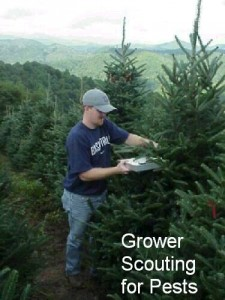 Grower scouting for pests