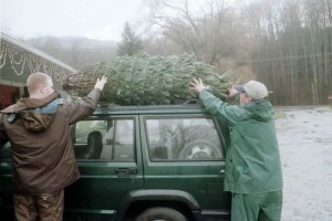 Workers tying a Christmas tree to a car roof